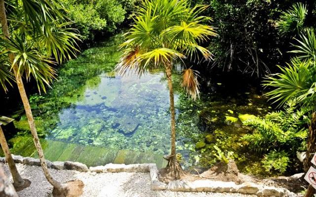 Hotel Bel Air Collection Resort & Spa Xpu-Ha Riviera Maya, manglar