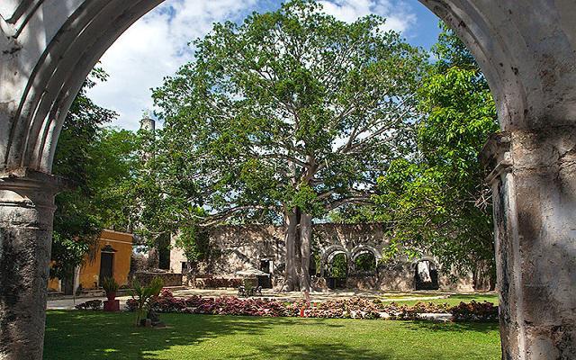 Disfruta de los paisajes verdes y de la monumental Ceiba que caracteriza a la propiedad