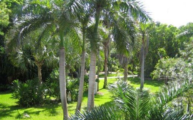 Jardines Hotel Las Palapas Playa del Carmen