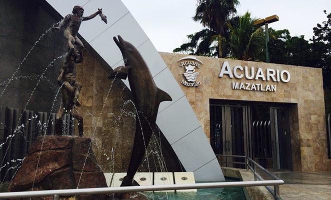 Acuario mazatlan mazatl n informaci n de acuarios en for Acuario marino precio