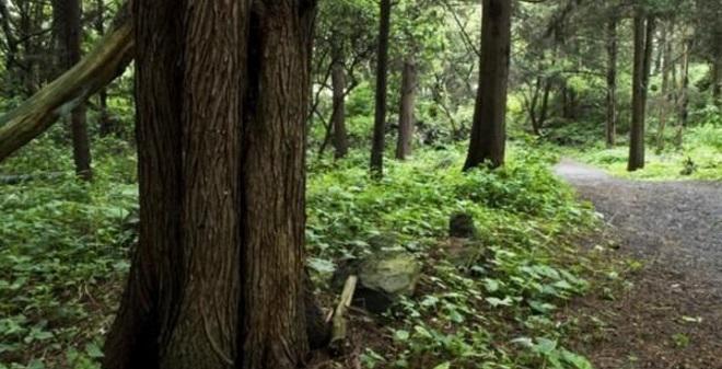 Bosque de Tlalpan Ciudad de México