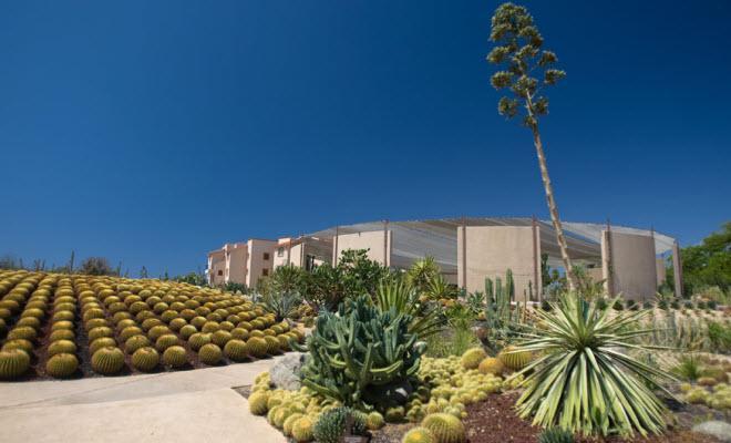 Cacti Mundo