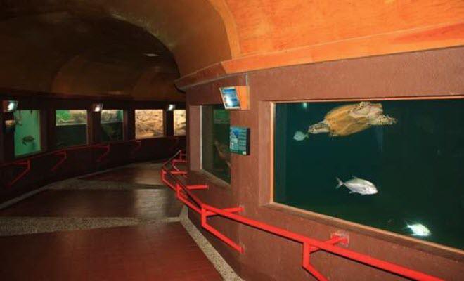 Museo de la Tortuga