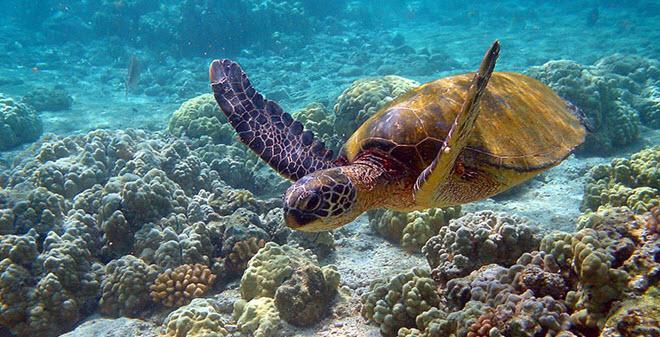 Parque Nacional Arrecifes Puerto Morelos