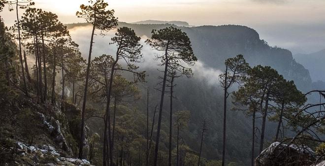 Reserva de la Biósfera Sierra de Manantlán Costalegre