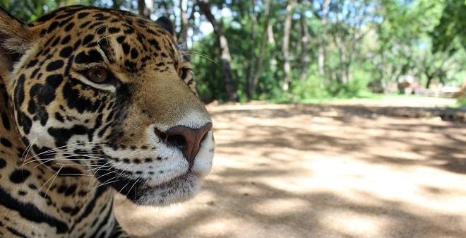 Zoofari Cuernavaca