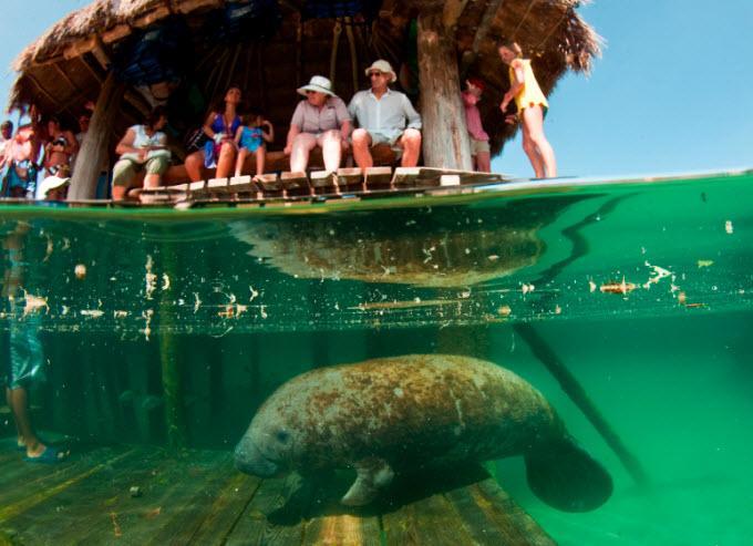 Tours De Playa Del Carmen