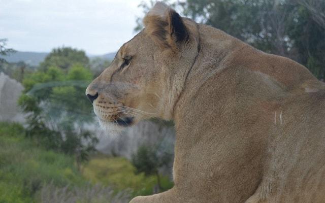 Africam Safari desde Puebla, aprenderás muchos datos curiosos
