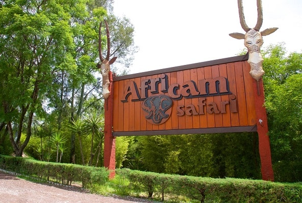 Africam Safari desde Puebla en Puebla