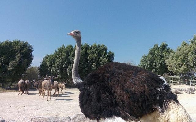 Africam Safari desde Puebla, lugar lleno de fascinantes experiencias