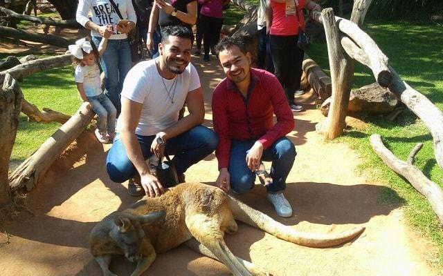 Africam Safari desde Puebla, estarás a pocos pasos de diversas especies