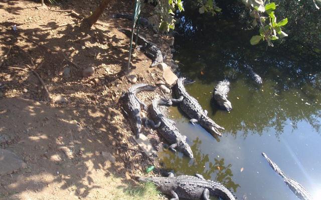 Visita un cocodrilario