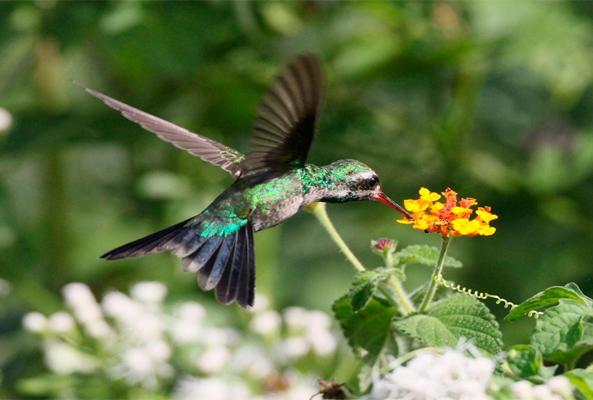 Tour Observación de Aves en Sian Ka'an recomendado