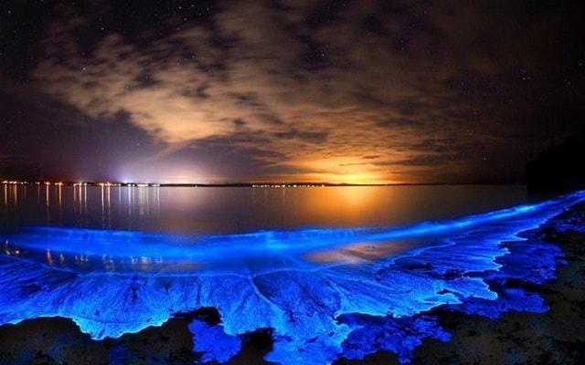Bioluminiscencia en Laguna de Manialtepec,  es un espectáculo único e inigualable