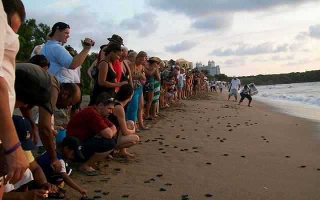 Bioluminiscencia y Liberacion de Tortugas en Huatulco, libera tortugas en Playa Bacocho
