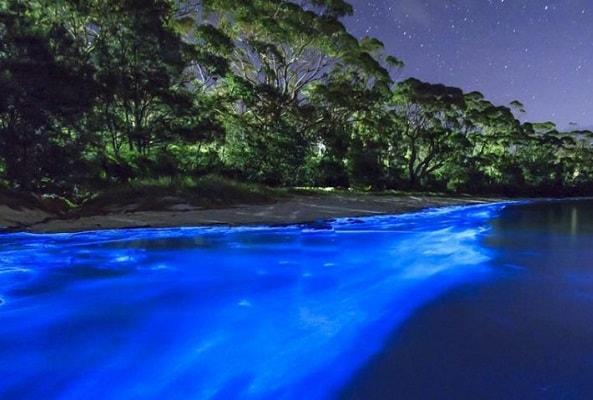Bioluminiscencia y Liberacion de Tortugas en Huatulco