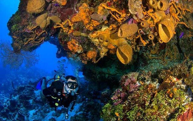 Buceo en Cozumel, descubre la vida marina en el Mar Caribe