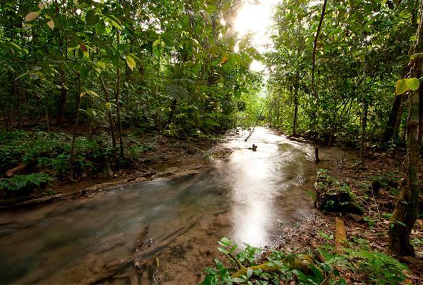 Tour Caminata por la Selva Lacandona recomendado