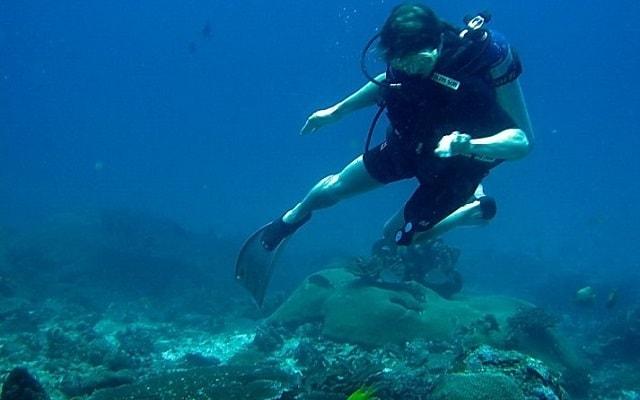 Circuito de Aventura por Veracruz 3 días, encontrarás peces de diferentes especies y una pared de coral