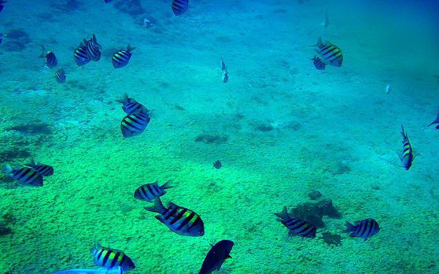 Explora los arrecifes y conoce el mundo marino del Mar Caribe