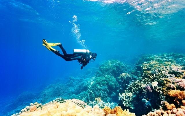 De Aventura por Veracruz, disfrutarás de la vida marina en el arrecife si seleccionas buceo