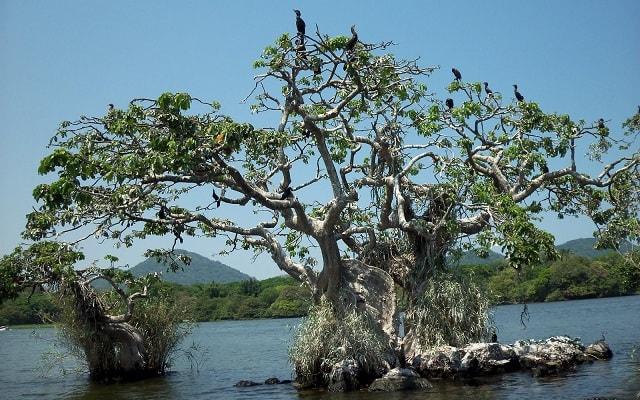 De Aventura por Veracruz, conocerás la Isla de las Garzas