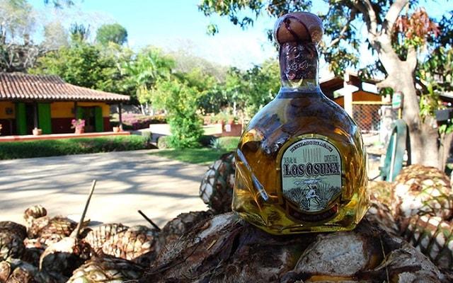 Huana Coa Canopy Adventure, podrás ver el proceso de la producción del tequila
