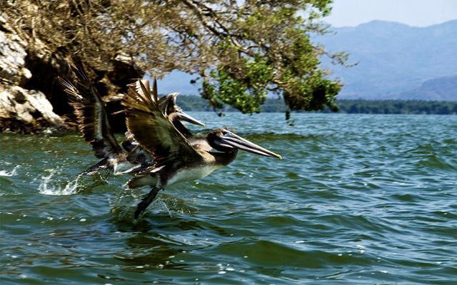 Laguna de Coyuca, podrás admirar la flora y la fauna local
