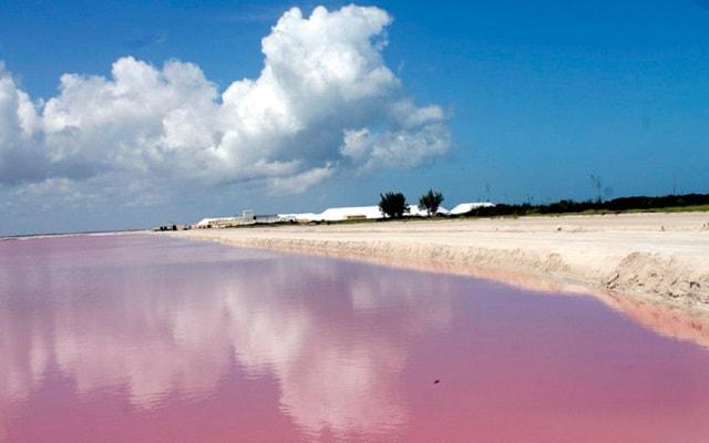 Las Coloradas y Río Lagartos, Yucatán, te has preguntado porque del color rosado?