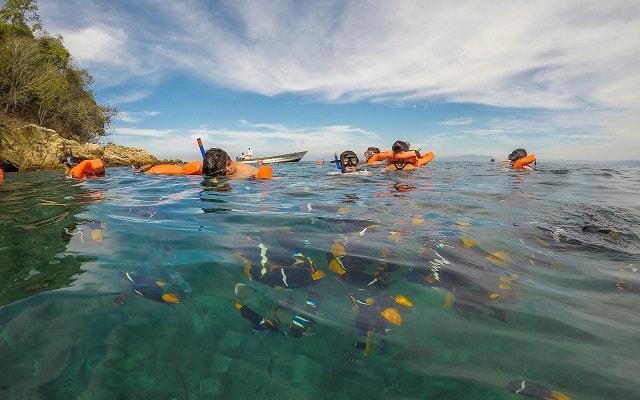 Marigalante Barco Pirata Puerto Vallarta, podrás convivir con la vida marina si eliges snorkel