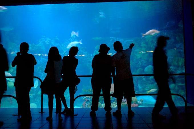City tour con museos y san juan de ulua tours paseos y for Precio entrada aquarium