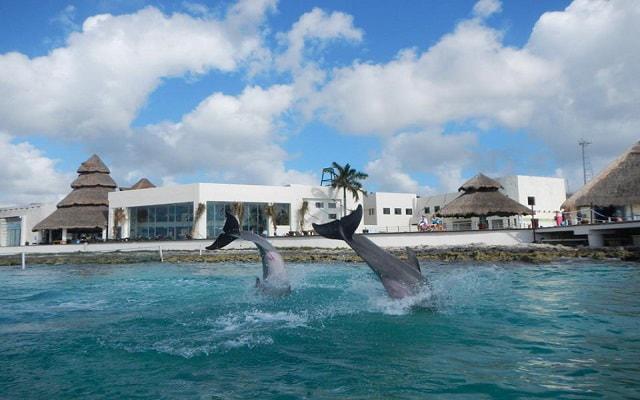 Nado con Delfines Cozumel, una experiencia inolvidable
