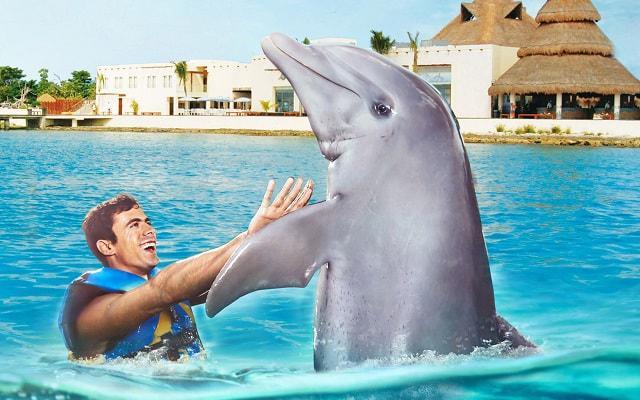 Nado con Delfines Cozumel, podrás tocarlos y acariciarlos