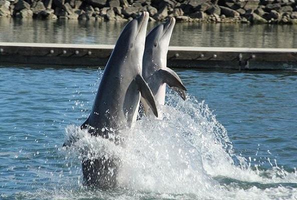 Nado con Delfines Los Cabos