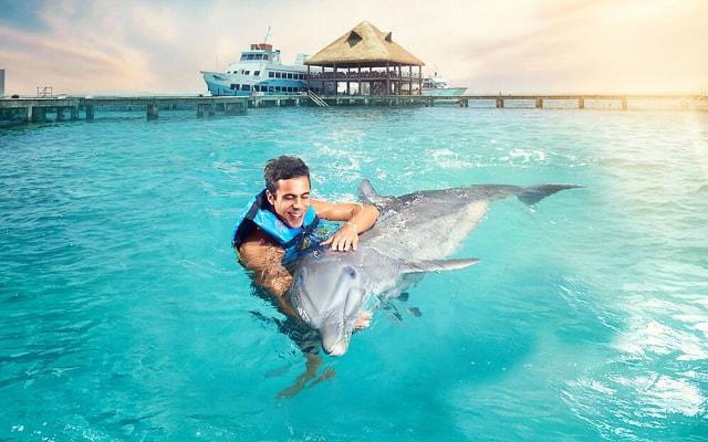 Nado con Delfines Cancún-Isla Mujeres, podrás acariciarlos