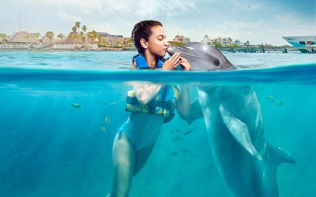 Nado con Delfines Cancún-Isla Mujeres, son muy cariñosos