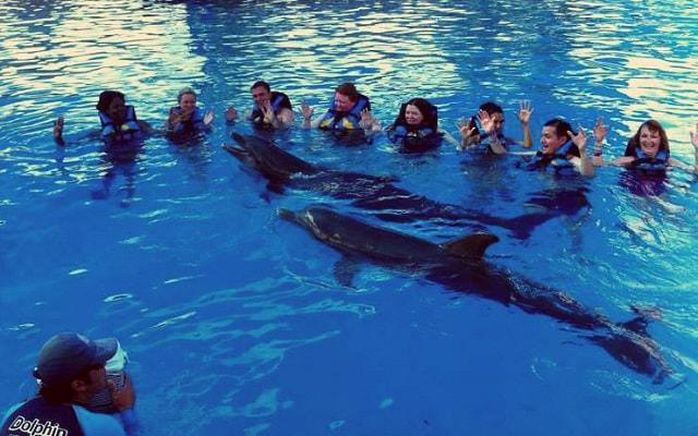 Nado con Delfines Vallarta, vive esta emoción con quien más lo desees