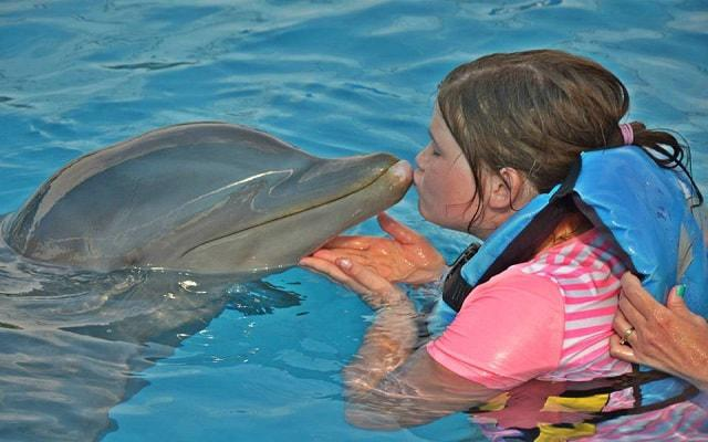 Nado con Delfines Vallarta, de acuerdo a la opción de tour que elijas serán las actividades que podrás realizar
