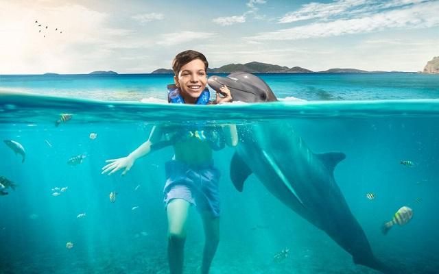 Nado con Delfines Vallarta, será inolvidable