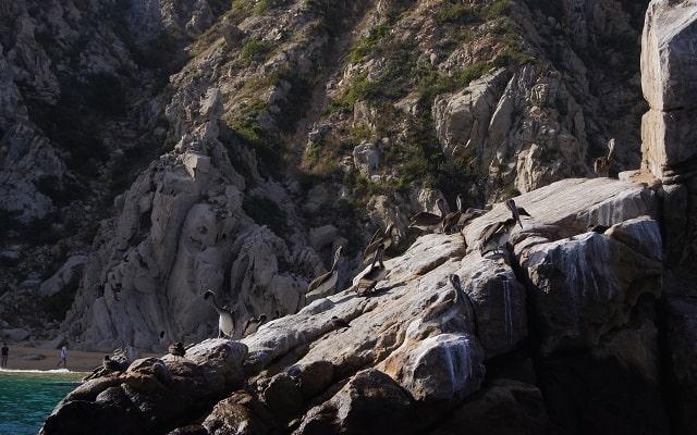 Paseo en Lancha Fondo de Cristal por Arco del Fin del Mundo, conoce más de la fauna local