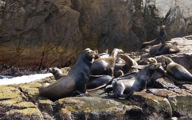 Paseo en Lancha Fondo de Cristal por Arco del Fin del Mundo, colonia de lobos marinos