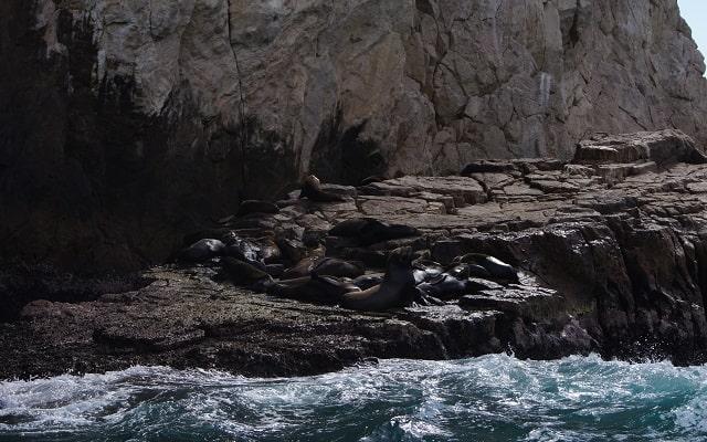 Paseo por Arco del Fin del Mundo y Mar de Cortés, colonia de lobos marinos