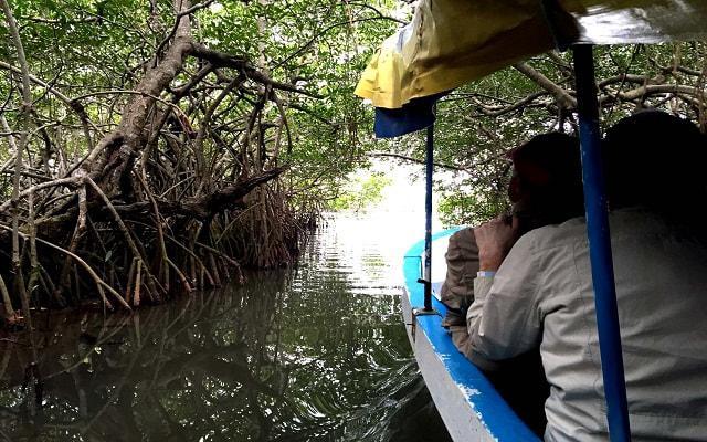 Paseo por Laguna en Mandinga,  recorrerás los manglares de la laguna