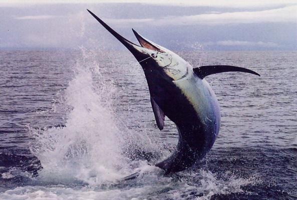 Pesca en Acapulco