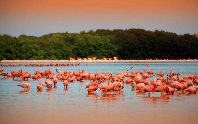 Recorrido por Yucatán: Las Coloradas, Río Lagartos y más, vistas panorámicas en la Reserva de la Biosfera