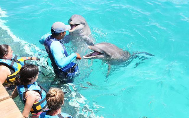 Este sitio ofrece actividades para convivir con delfines con costo adicional