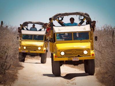 Camionetas - Tour Safari en Camello
