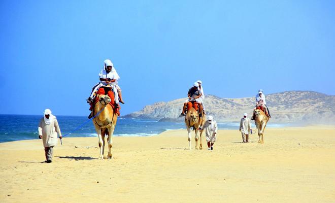 Safari en camello los cabos