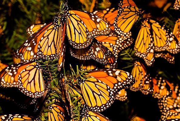 Tour al Santuario de la Mariposa Monarca en Estado de México en Ciudad de México