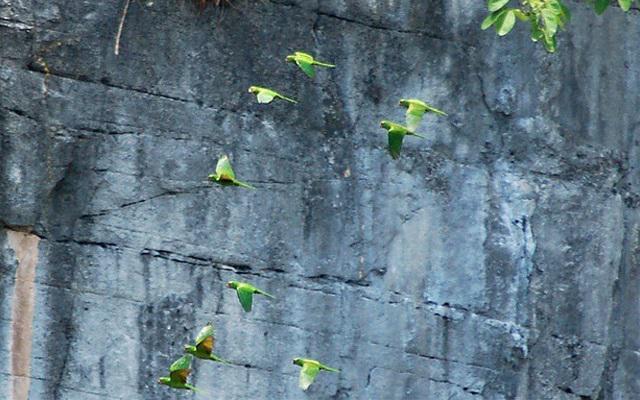 Sima de las Cotorras, te impresionará la cantidad de aves